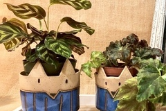 Selling with online payment: Foxy Planters