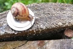 Vente avec paiement en direct: Escargot en coquille à la Bourguignonne
