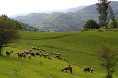 Vente avec paiement en direct: Vente agneau direct producteur