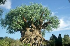 Online Payment - Group Session - Pay per Session: Introduction to the Tree of Life