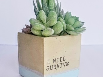 Selling with online payment: Cute Cement Planters for Succulents