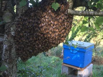 Les miels : Miel de Kertessier