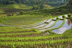 Réserver (avec paiement en ligne): Les sentiers des dieux - Bali - Indonésie