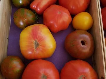 Vente avec paiement en direct: Tomates variétés anciennes toutes couleurs