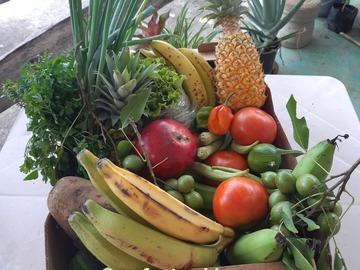Vente avec paiement en direct: Panier  fruits et légumes