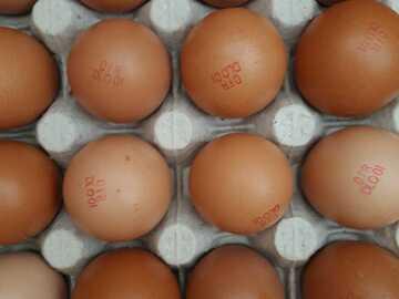 Vente avec paiement en direct: Panier œufs