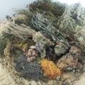 Workshop Angebot (Termine): Pflanzenzyklus- Winter- Ruhe und Räucherkraft