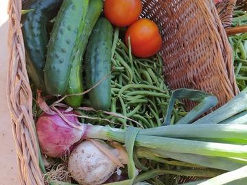 Vente avec paiement en direct: Légumes direct producteur, agriculture raisonnée