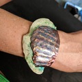 Selling with online payment: Seashell Bracelet