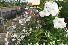 Vente avec paiement en direct: La Planterie - plants bio aromates, fleurs, légumes