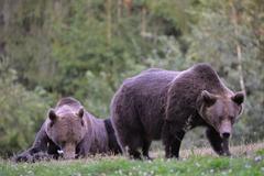 Réserver (avec paiement en ligne): La vie sauvage de la Roumanie