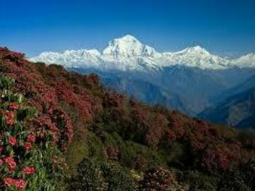 Offering with online payment: Ghorepani Poon Hill Trek - 10 Days