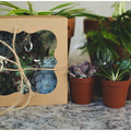 Selling with online payment: Succulents Gift Set (5)