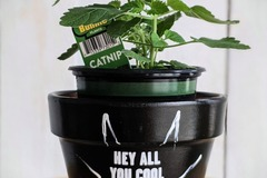 """Selling with online payment: 6.5"""" x 6.5"""" Specialty Made Flower Pots"""