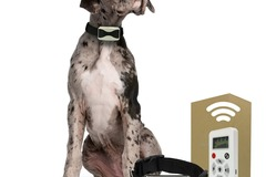 Buy Now: Dog Training Collar with Remote - 800 Yards - Med – Large - 1 Dog
