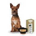 Buy Now: Dog Training Collar with Remote - 800 Yards - Small - Medium