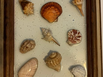 Selling with online payment: Large Shells I