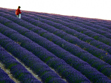 Workshop Angebot (Termine): Die Farben des Lavendels