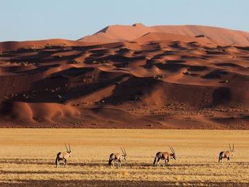 Réserver (avec paiement en ligne): Découverte et Safari - Namibie