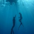Freediving courses: SSI Level 3
