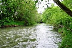 Water Bank: TransAlta Skookumchuck/Chehalis River Water Bank