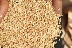 Vendre: Sesame seed