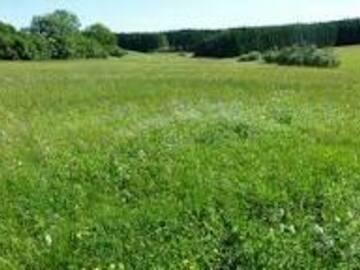 Tauschobjekt: Tausche Wald gegen Grünland  (zwischen Paderborn u Lichtenau)