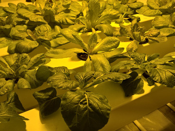 Online Payment - Group Session - Pay per Session: Private Hydroponics Lesson & Build