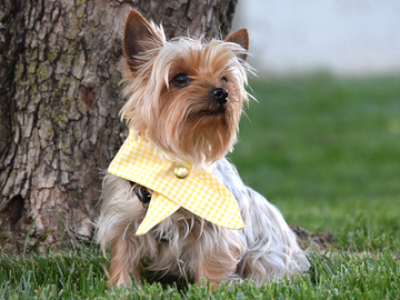 Selling: The Snap Bandana in Yellow Check