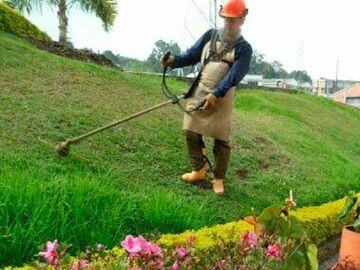 Servicios: Mantenimiento de areas verdes