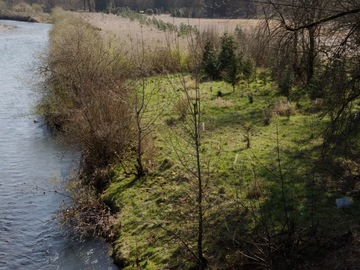 Land Available for Lease: Peter Molalla River Native Restoration Lands.