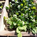 NOS JARDINS A PARTAGER: jardin potager bio à partager
