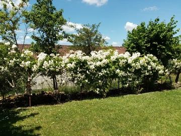 NOS JARDINS A LOUER: Jardin paysagé