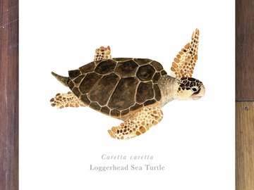 Selling with online payment: Sea Turtles of Florida Prints