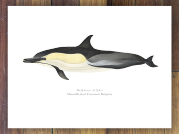 Selling with online payment: Marine & Florida Wildlife Prints