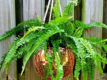 Selling with online payment: Rose Gold Disco Ball Planter. 10 Inches