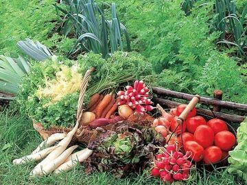NOS JARDINS A PARTAGER: Proposition d'un jardin à Montreuil pour création de potager