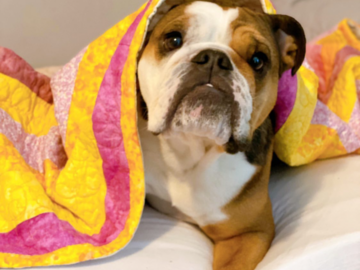 Selling: Quilts  - Handsewn Beautiful Comfort Quilts for Dogs