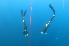 Freediving courses:  Freediving course in 1 to 1 Tenerife, Spain