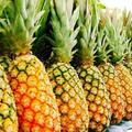 Vendre: Ananas frais export