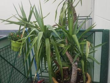 Vente: Grande plante exotique