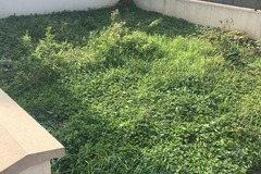 NOS JARDINS A PARTAGER: jardin en friche qui demande à renaître