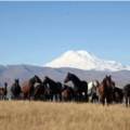 Réserver (avec paiement en ligne): Transhumance in Kabardino Balkaria - Russia