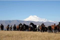 Réserver (avec paiement en ligne): Transhumance en Kabardino Balkarie - Russie