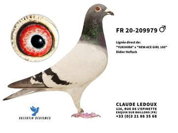 Vente avec paiement en ligne: FR.20-209979