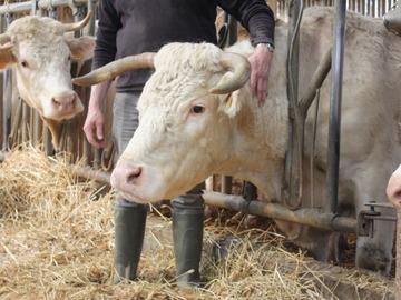 Vente avec paiement en direct: colis viande bovine