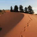 Info Only: Coral Pink Sand Dunes