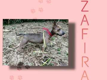 Anuncio: ¡Zafira en adopción!