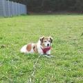 Dienstleistung: Zuverlässige Betreuung Ihrer Tiere