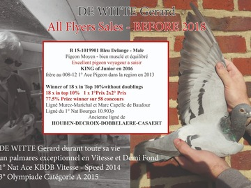 Vente avec paiement en ligne: B 15-1019901 Bleu Delange - Mâle